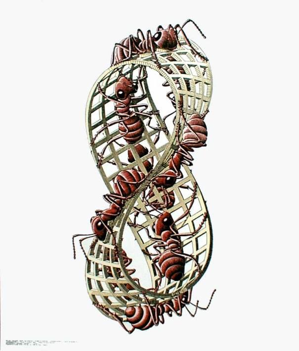 MC Escher's ants on a moëbius strip