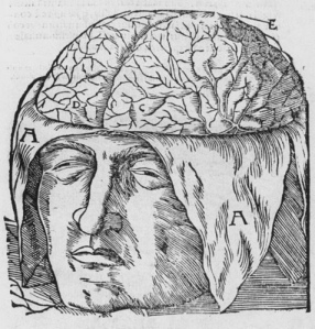 16th century anatomical drawing of the brain